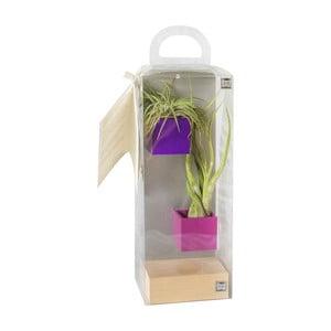Sada 2 malých magnetických kvetináčov s podstavcom a rastlinkami, fialová