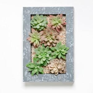 Nástenný kvetináč s umelými sukulentmi Wall, 30x18 cm