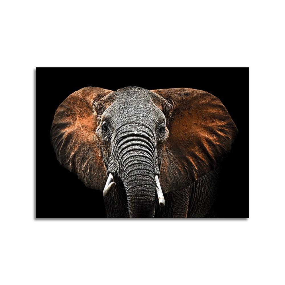 Obraz Styler Glas Animals Red Elephant, 70 × 100 cm
