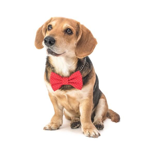 Červený charitatívny psí motýlik s malými bodkami Funky Dog Bow Ties, veľ. S