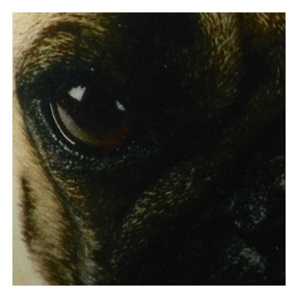Vankúš Pug Dog, 50x50 cm