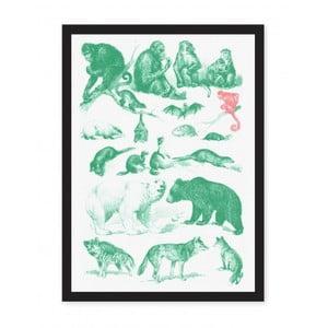 Plagát Ohh Deer Collection Of Mammals, 29,7 x 42 cm