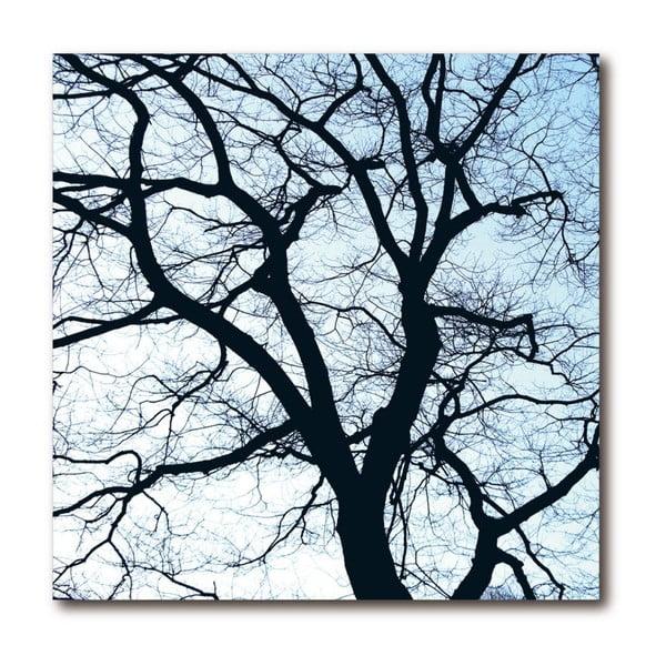 Obraz Remember Old Trees 1
