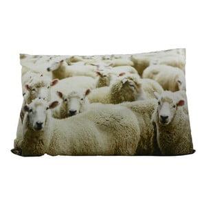 Vankúš Sheep 60x40 cm