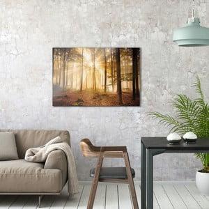 Sklenený obraz OrangeWallz Forest, 60 x 90 cm