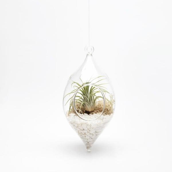 Terárium s rastlinami Icile