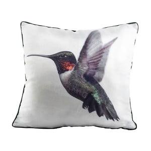 Vankúš Fisura Hummingbird, 45x45cm