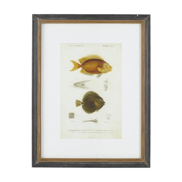 Obraz Athezza Fish Acanthures, 55x47 cm