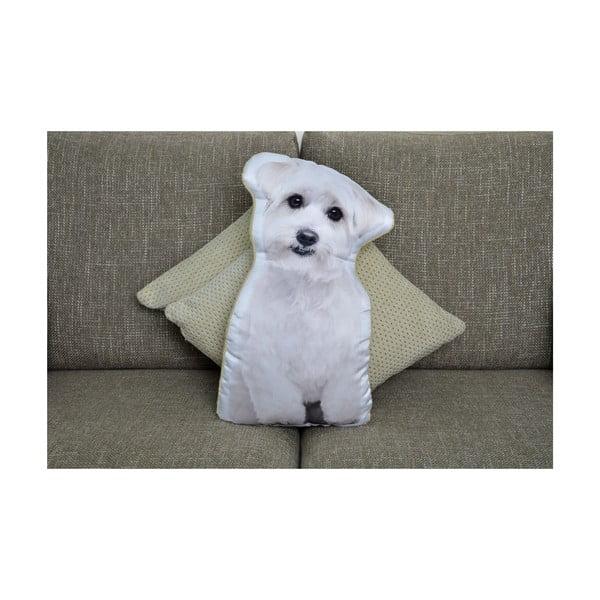 Vankúšik Adorable Cushions Maltezáčik