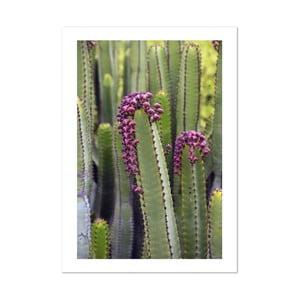 Plagát HF Living Botanic Hide, 50×70 cm