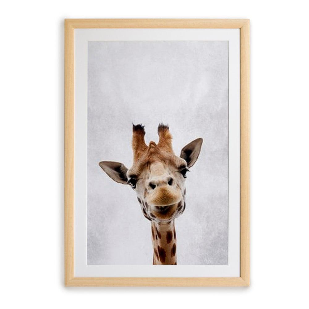 Nástenný obraz v ráme Surdic Giraffe, 30 x 40 cm