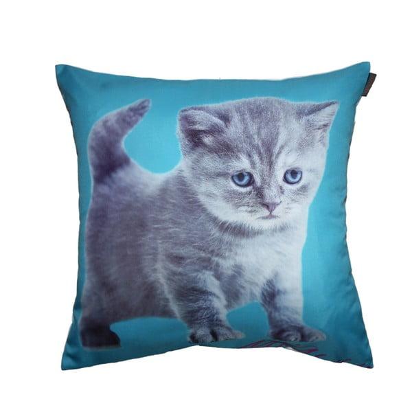 Obliečka na vankúš Cute Kitty, 45x45 cm