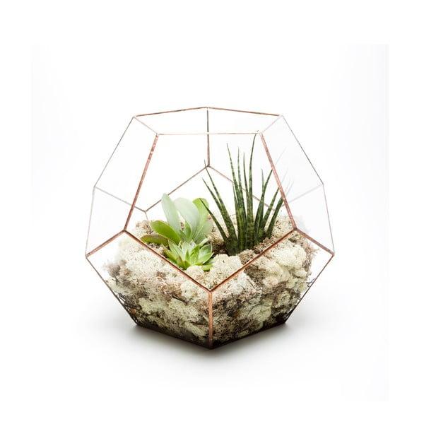 Terárium s rastlinami Supersize Penta, svetlý rám