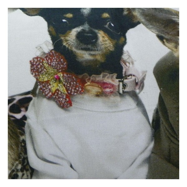 Vankúš Chihuahuas 35x50 cm