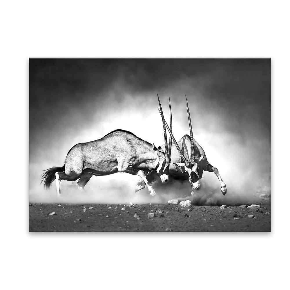 Obraz Styler Glas Animals Gazelle, 70 × 100 cm