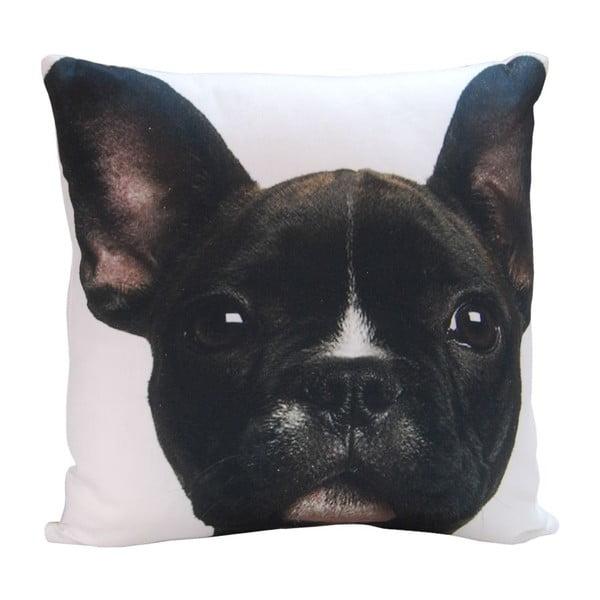 Vankúš Black Puppy, 45x45 cm