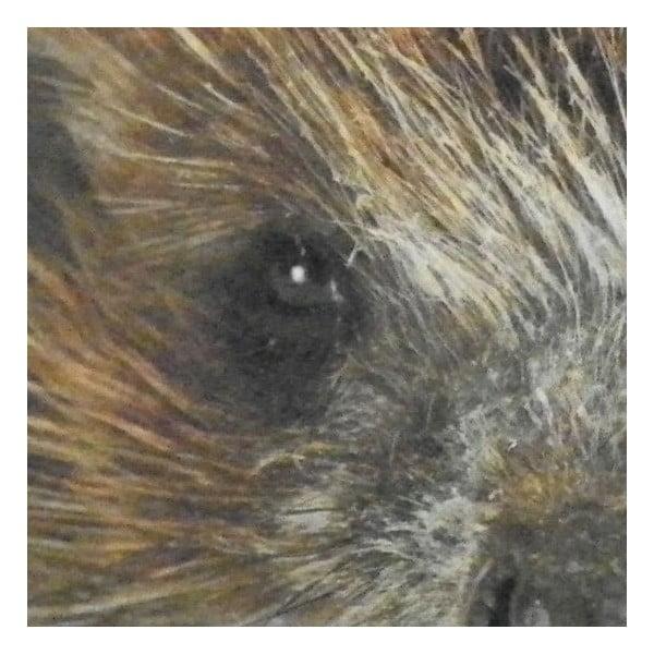 Predložka Hedgehog 75x50 cm