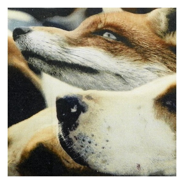 Vankúš Fox Hounds 50x35 cm