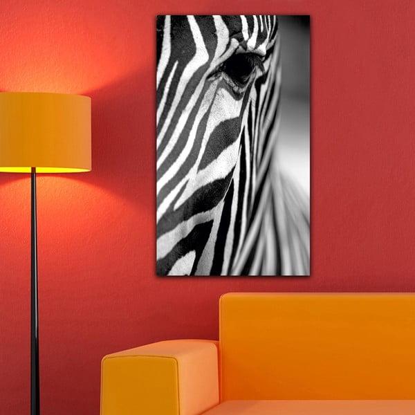 Obraz Black&White Zebra, 41 x 70 cm