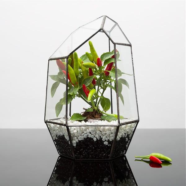 Terárium s rastlinami Chilli Aztec Gem, tmavý rám