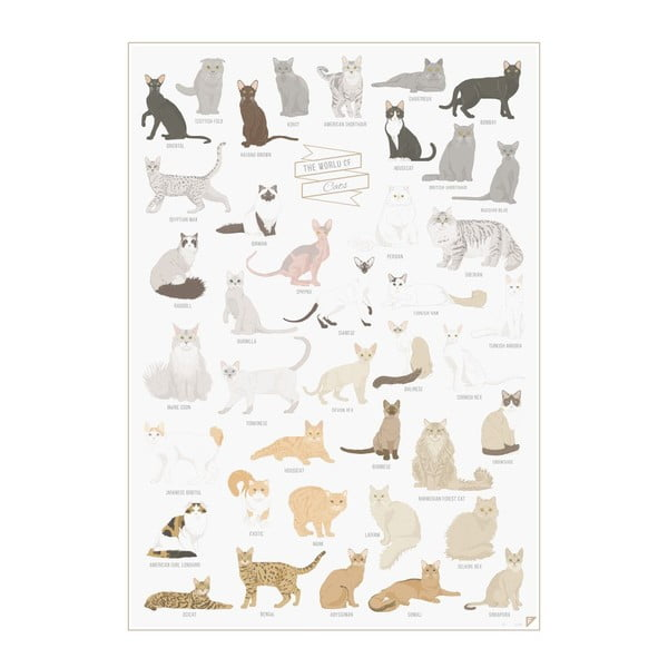 Plagát Follygraph The World of Cats, 42x59,4 cm