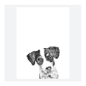 Plagát Ziggy The Jack Russell, 30x40 cm