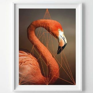 Plagát Flamingo Portrait, A3