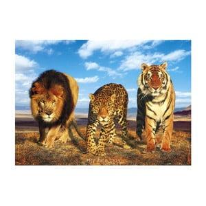 Fotoobraz The Wild Cats, 51x81 cm