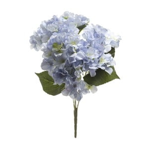 Svetlomodrá dekoratívna kvetina Heaven Sends Hydrangea