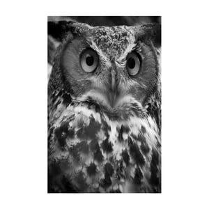 Obraz Black&White Owl, 45 x 70 cm