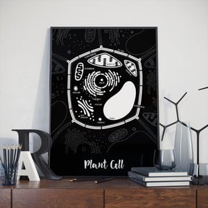 Čierny plagát Follygraph Plant Cell, 30x40cm