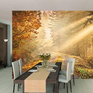 Veľkoformátová tapeta Deep Forest, 315x232 cm