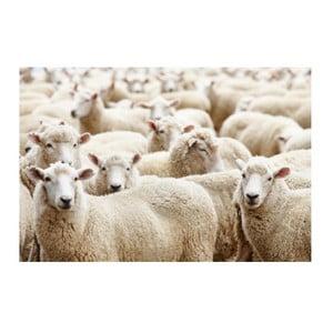 Predložka Sheep 75x50 cm