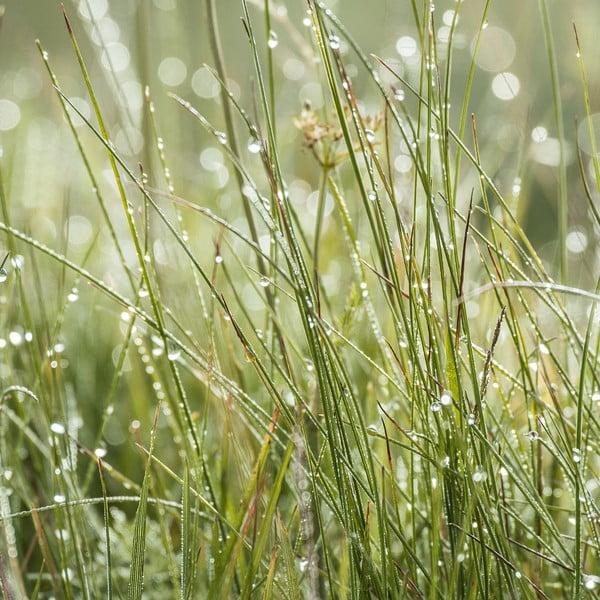 Sklenený obraz Sparkling Grasses, 30x30 cm