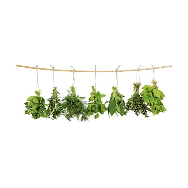 Sklenený obraz Hanging Herbs, 30x80 cm