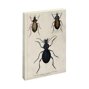 Zápisník Jay Biologica Beetle