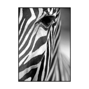 Plagát Imagioo Zebra Texture, 40×30 cm