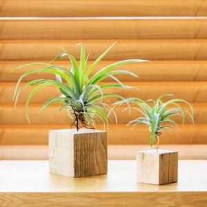 Set drevených kvetináčov Air pant Duo