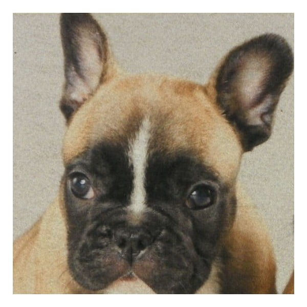 Predložka French Bulldog Puppies 75x50 cm