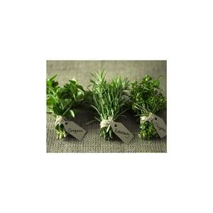 Obraz Herbs, 50x65 cm
