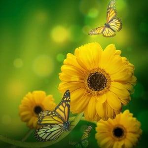 Obraz Kvetinový deň, 60x60 cm