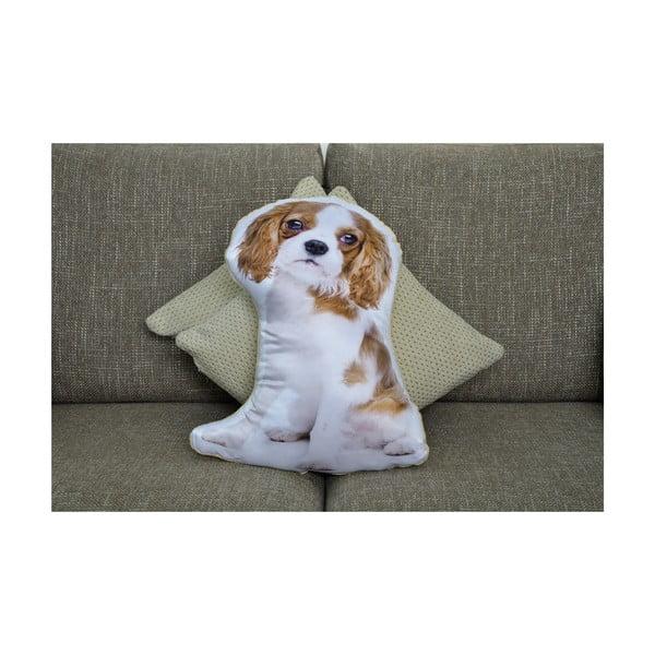 Vankúšik Adorable Cushions Kavalierik