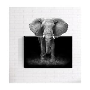 Nástenný 3D obraz Mosticx Afrika, 40 x 60 cm