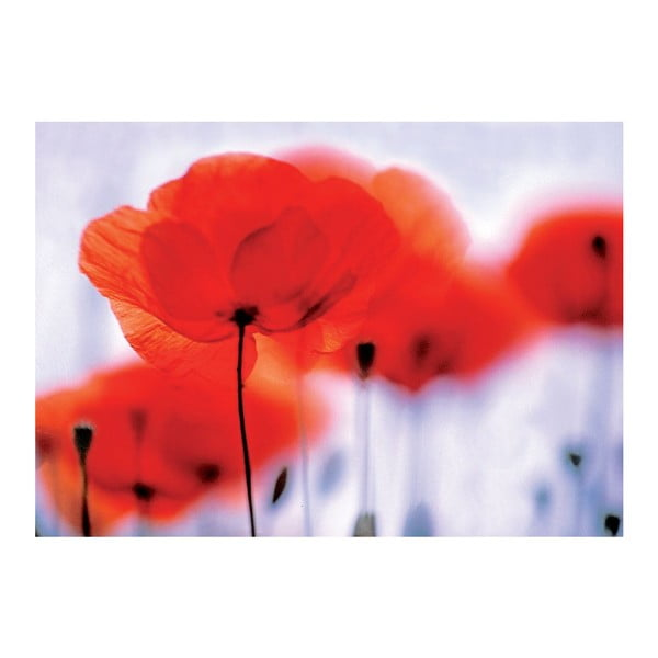 Tapeta Magical Poppies, 400x280 cm