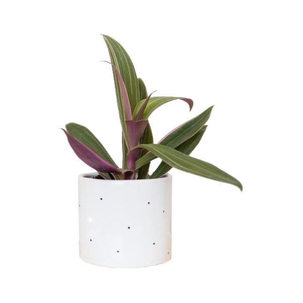 Kvetináč Dots, 11 cm