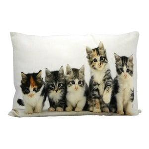 Vankúš Kittens 50x35 cm