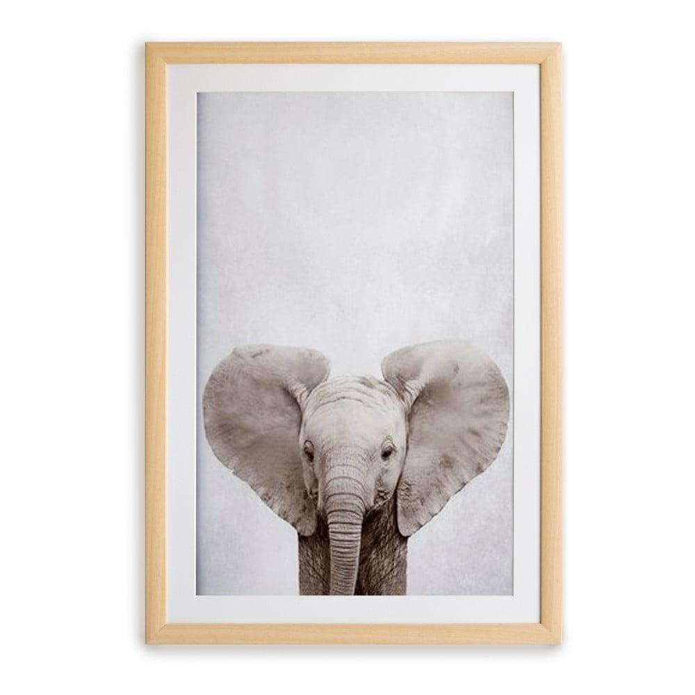 Nástenný obraz v ráme Surdic Elephant, 30 x 40 cm
